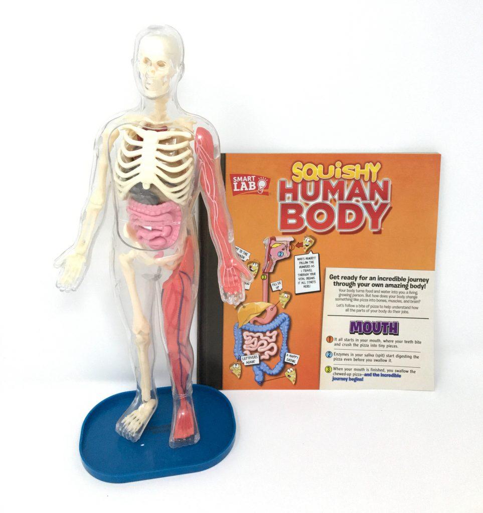 Smartlab Toys Squishy Human Body Brain Game Toys